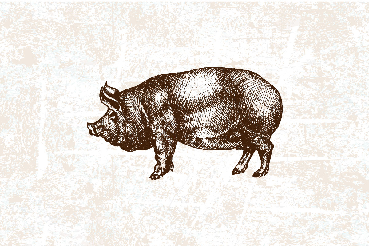 El cerdo blanco. Una carne mejor de lo que te imaginabas